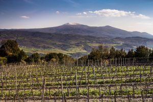 The top vineyards in Italy with stellar prices: from Barolo to Brunello, and more