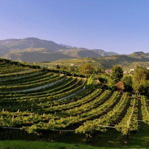 Il Monte Baldo e l'Amarone: a WineNews il professor Andrea Sbarbati e Sabrina Tedeschi