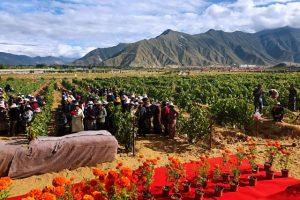Il vigneto più alto del mondo è in Tibet: 67 ettari vitati a 3.563,31 metri sul livello del mare