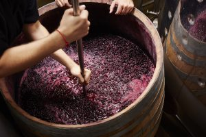 "Italy, France and Spain, then USA, Argentina and Chile: the ""borsino"" of the 2018 grape harvest"