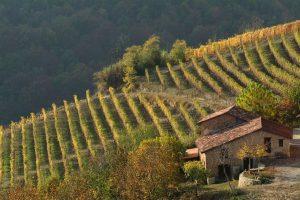 Arriva il decalogo per il matrimonio perfetto tra vino e paesaggio