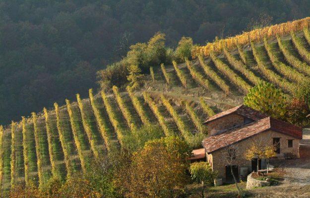 FAO-GIAHS, PAESAGGI VITATI, vino, Italia
