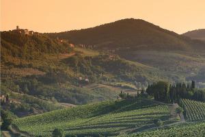 I Quaderni di WineNews - Il Chianti Classico