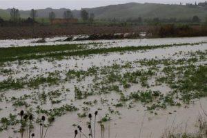 Maltempo, stato di calamità per l'agricoltura e immediata verifica dei danni: lo chiede Coldiretti