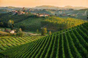 """L'""""altro Piemonte"""" alla ribalta: dall'Asti alla Barbera, nella """"Moscato d'Asti Experience 2018"""""""