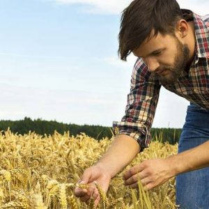Le imprese agricole in Italia funzionano meglio se sono guidate da giovani: i dati Nomisma