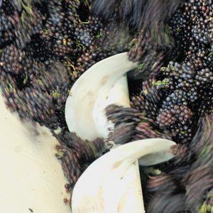 36.8 million hectolitres of wine in Italian cellars, 22% in Veneto, 51.5% with a Denomination