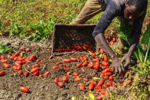 """Produzione di cibo, tutela dei diritti e gdo: l'attacco di Oxfam nel rapporto """"Al giusto prezzo"""""""
