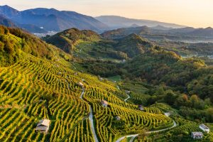 Conegliano Valdobbiadene Prosecco Superiore Docg: volumes and values grow, in Italy and worldwide
