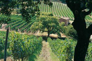 """Quel che resta dei """"Super Tuscan"""""""