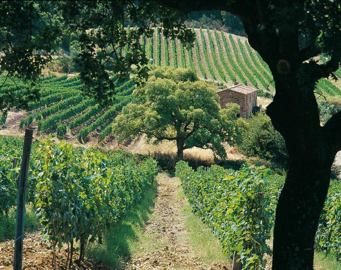 BOLGHERI, SUPER TUSCAN, TENDENZE, Su i Quaderni di WineNews