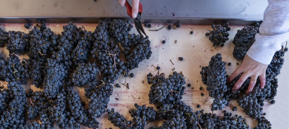 Harvest 2019: excellent quality, for some the best ever, for the great reds of Italy