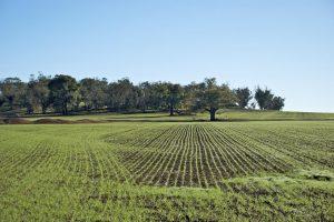 In mano alle amministrazioni pubbliche 10 miliardi di euro di terreni agricoli non valorizzati