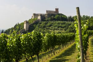 "Cantina di Soave ""Italian Wine Producer of The Year"" all'International Wine & Spirits Competition"