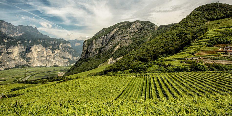 BOLLICINE DI MONTAGNA, ISTITUTO TRENTODOC, TRENTODOC, Su i Quaderni di WineNews