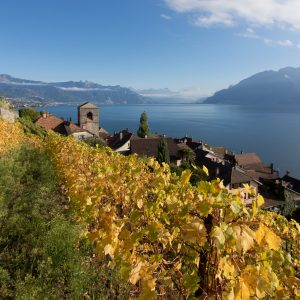 Switzerland, a small large industry, where Italy exports 375 million euros of wine