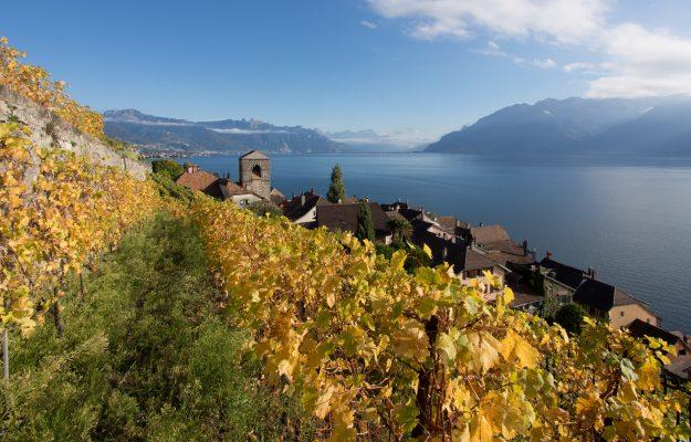 ITALIAN WINE, SWITZERLAND, News