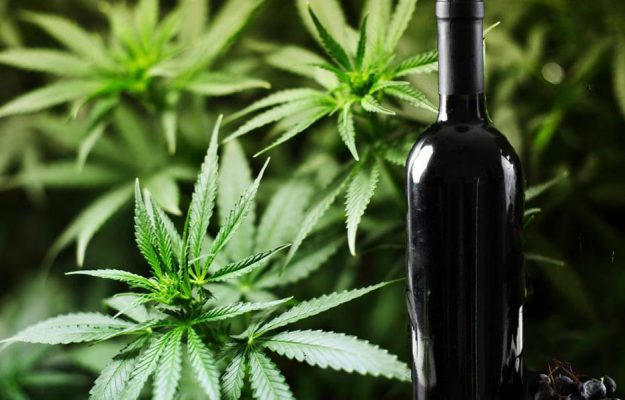 CALIFORNIA, CANNABIS, CONSUMI, LULIA HALSTEAD, USA, vino, WINE INTELLIGENCE, Mondo