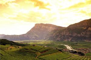 I Quaderni di WineNews - Il TrentoDoc