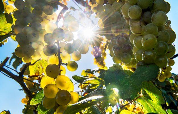 CLIMATE CHANGE, LUIGI MOIO, MERANO, MERANO WINE FESTIVAL, WINE, News