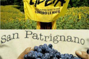 La cooperazione agricola per il sociale nel racconto di Libera Terra e San Patrignano