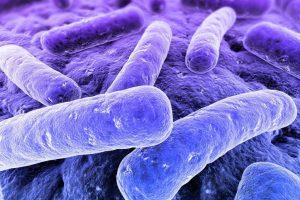 Il cibo del futuro? Il segreto è nei batteri. Ecco Circles, progetto dell'Università di Bologna