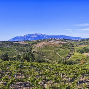 Italy is the leading organic vineyard and boasts the largest biodynamic winery in the world