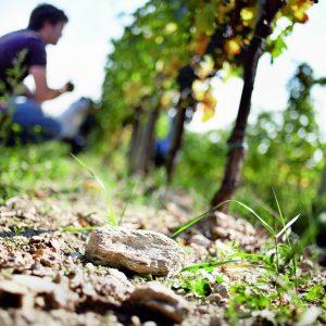 A WineNews il professore Roberto Zironi, docente di Enologia all'Università di Udine