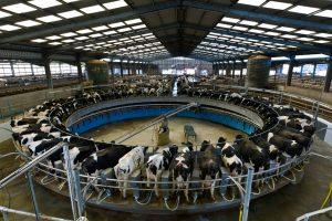 """L'appello di Slow Food """"occorre ridurre i consumi di carne, abbiamo bisogno di politici coraggiosi"""""""