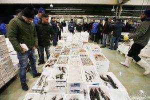 """Più trasparenza, sicurezza alimentare e tracciabilità: il rilancio del """"Mercato Ittico Milano"""""""