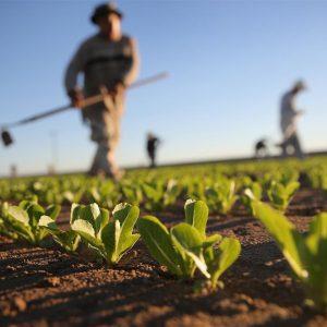 L'agricoltura è l'unico settore che, negli ultimi 10 anni, è riuscito a mantenere stabili i livelli