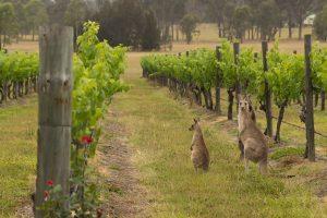 Cina, azzerati i dazi sul vino australiano, che ora lancia la sfida al primato della Francia