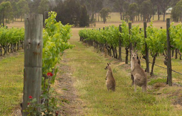AUSTRALIA, CINA, DAZI, vino, Mondo