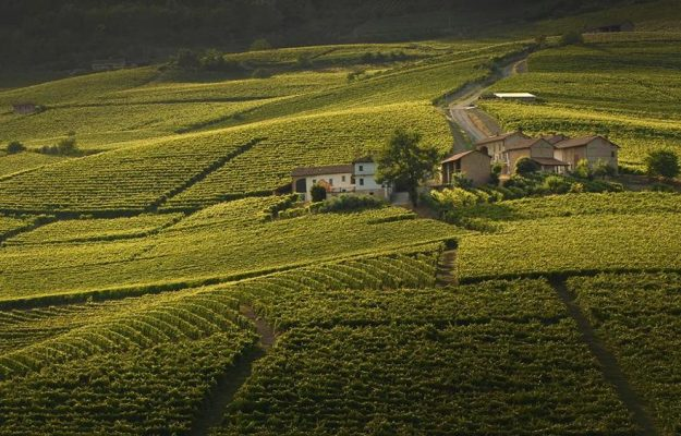 BARBARESCO, BAROLO, News