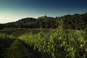 Castello Banfi still grows in Montalcino: 173.2 hectares of Brunello vines