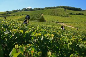 Champagne in the future: goodbye to herbicides by 2025 and sustainability in the vineyard by 2030