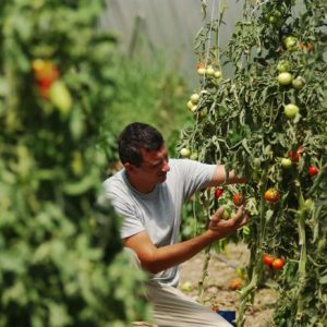 Agricoltura, gli infortuni sul lavoro calano dell'1,8%, i casi mortali del 7%
