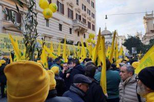 Tra crisi, proteste e politica, il caos sull'olio italiano in crisi dopo un raccolto 2018 dimezzato