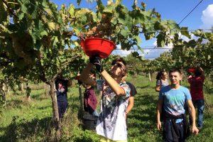 Gli Istituti Agrari ammessi ai bandi regionali per lo sviluppo rurale: la proposta del Veneto
