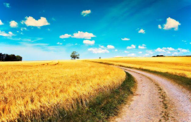 AGRICOLTURA, AGRINSIEME, GIAN MARCO CENTINAIO, INFRASTRUTTURE, NOMISMA, Non Solo Vino