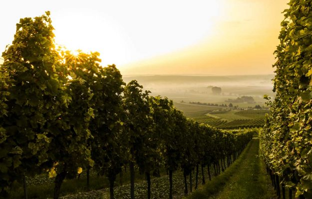 MERCATO, RABOBANK, TREND, vino, Mondo