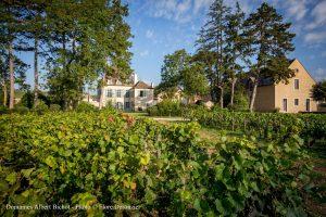 Dal vertice di Vinexpo Bordeaux alla poltrona di Ceo di Domaine Albert Bichot in Borgogna