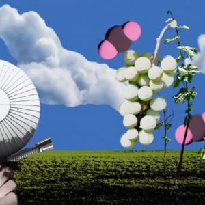 Global warming: in Germania si studiano gli effetti della CO2 sul vino del futuro