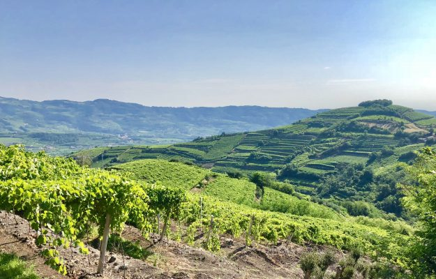 CRU, SOAVE, WINE TOURISM, News