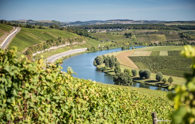 Germania, LANDSCAPE, WINE INTELLIGENCE, Mondo
