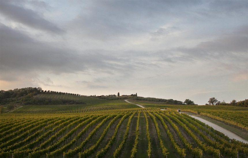 CHIANTI CLASSICO, Su i Quaderni di WineNews