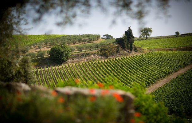 DAZI, vino, WINE ORIGINS ALLIANCES, Mondo