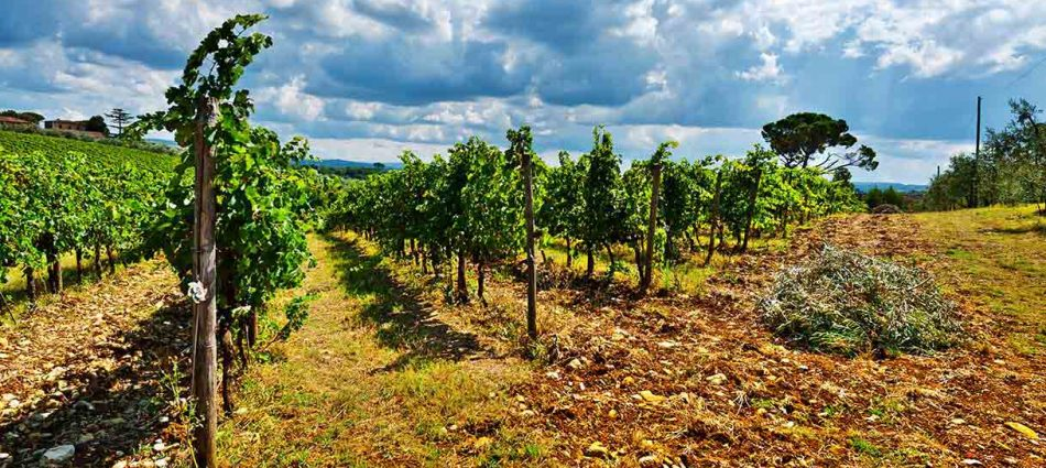 Le misure dell'Ocm architrave della crescita del settore vino nel Vecchio Continente