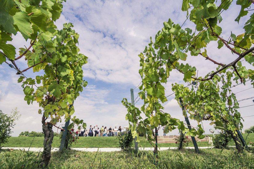 Siti di incontri per gli amanti del vino