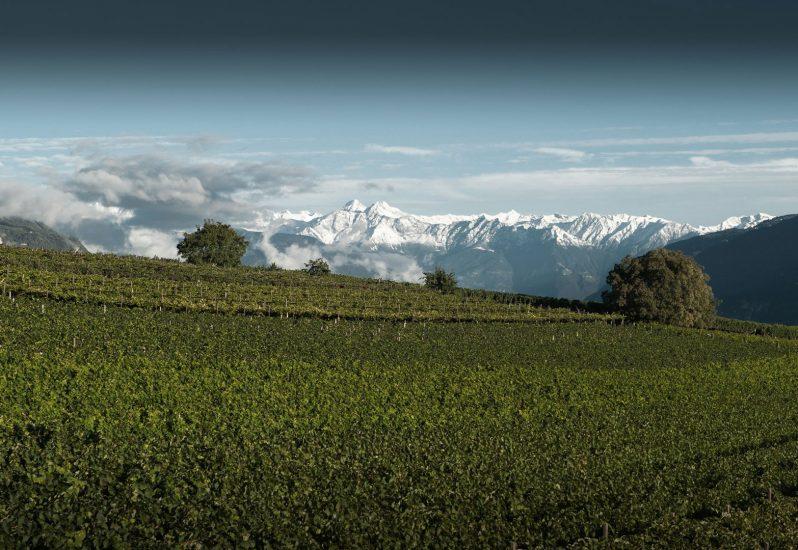 ALTO ADIGE, Su i Quaderni di WineNews